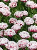 荷兰7的4月油漆 免版税库存照片