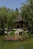荷花在中国庭院里 图库摄影