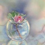 荷花在花瓶水彩背景中 向量例证