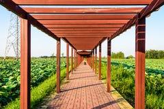 荷花池和长的走廊 图库摄影