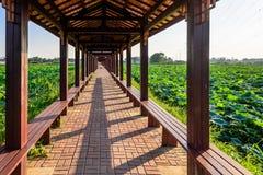 荷花池和长的走廊 库存照片