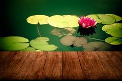 荷花& x28的看法; Nymphaéa& x29;庭院池塘表面上  免版税库存照片