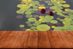 荷花& x28的看法; Nymphaéa& x29;庭院池塘表面上  免版税库存图片