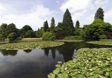荷花-睡莲科或睡莲叶在Shefield湖, Uckfield,英国 库存图片