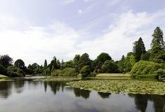 荷花-睡莲科或睡莲叶在Shefield湖, Uckfield,英国 免版税图库摄影