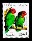 莉莲\ 's爱情鸟(Agapornis lilianae),鹦鹉serie,大约199 免版税库存图片