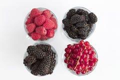 莓、一个大黑黑莓、红浆果和桑树位于清楚的玻璃轻的背景 免版税库存图片