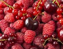 莓、樱桃和红浆果背景  新鲜的莓果特写镜头 顶视图 红色背景的浆果 各种各样的新鲜的su 库存照片