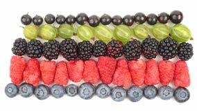 莓、鹅莓、黑莓、无核小葡萄干和蓝莓在行在白色背景 免版税库存照片