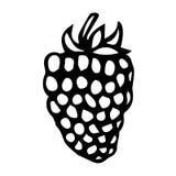 黑莓乱画样式传染媒介剪影,隔绝在白色背景 免版税图库摄影