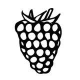 莓乱画样式传染媒介剪影,隔绝在白色背景 库存图片