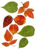 莓凹道对象油漆干燥秋天叶子  免版税库存图片
