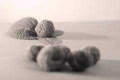 莓和一些离开 库存图片