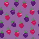 黑莓和莓 免版税库存照片