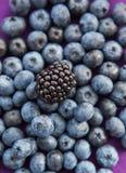 黑莓和蓝莓,选择聚焦 免版税库存照片