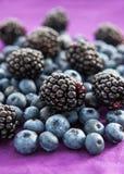 黑莓和蓝莓 免版税图库摄影