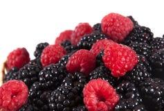莓和黑莓。 免版税库存照片