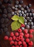 莓和黑莓蓝莓 免版税库存照片