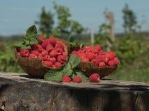莓在大麻的椰子壳站立在庭院里 库存图片