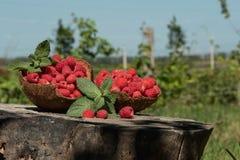 莓在大麻的椰子壳站立在庭院里 免版税库存图片