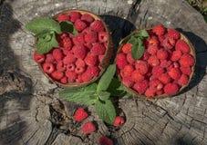 莓在大麻的椰子壳站立在庭院里 库存照片