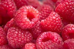 莓宏观照片  图库摄影