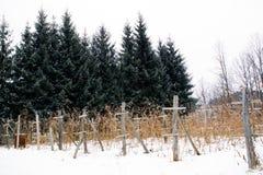 莓悬钩子属植物idaeus L的种植园 冬天 免版税图库摄影