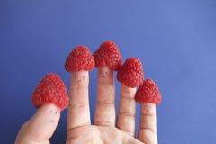 莓手 库存图片