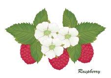 莓收集05 库存照片