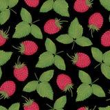莓收集06 免版税图库摄影