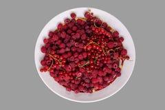 莓果与莓和红浆果混合在灰色背景 r 免版税库存图片