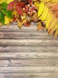莓果事假木板框架折扣11月 库存图片