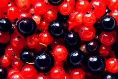 莓果背景 库存图片
