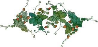 莓果和草莓小插图  免版税库存照片