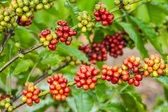 莓果咖啡 免版税库存照片