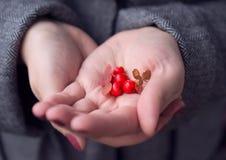 莓果在手上 库存照片