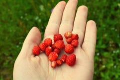 莓果在手中 免版税库存照片