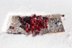 莓果在雪的蔓越桔冬天 库存照片