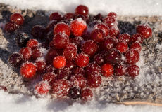 莓果在雪的蔓越桔冬天 免版税库存照片
