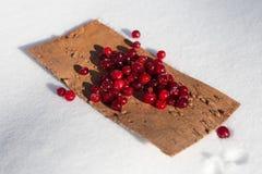 莓果在雪的蔓越桔冬天 库存图片