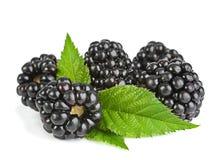 黑莓果子 免版税库存图片