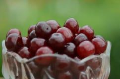 莓果收获  库存图片