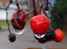 莓果有一些水下落 库存照片