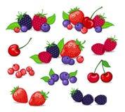 莓果汇集 库存图片