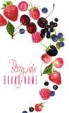 莓果混合落的横幅 库存例证