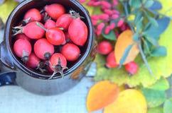 莓果狂放在木桌秋天和莓果被弄脏的背景叶子的一个腐烂的杯子上升了  免版税图库摄影