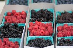 莓果的分类在一个农夫市场上在加利福尼亚:莓,黑莓,蓝莓,桑树 免版税库存图片