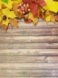 莓果离开木板框架折扣 免版税图库摄影
