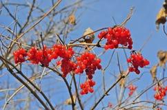 莓果箭头木头24 免版税图库摄影