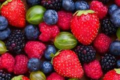 莓果背景宏指令,选择聚焦 免版税库存图片